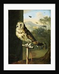 An Owl on a Perch by Willem van Mieris