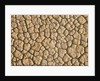 Cracked, Dry Lake Bottom Pattern in Death Valley by Corbis