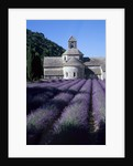 Abbey and Lavender Fields by Corbis