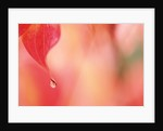 Dewdrop in the fall by Corbis