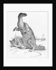 Illustration of Iguanodon by Corbis
