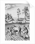 Engraving of Strip Farming by Wenceslaus Hollar
