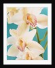 Blooming White Orchids by Corbis