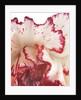 Curling Carnation Petals by Corbis