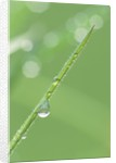 Dew on a Blade of Grass by Corbis