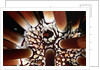 Slate-Pencil Sea Urchin by Corbis