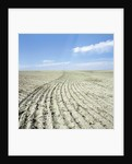 Dry furrowed farmland by Corbis