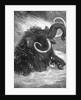 Mammoth by Corbis