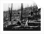 French Forest Destroyed in WWI by Corbis