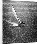 Catamaran Sailing in Mission Bay by Corbis