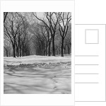 Central Park in Winter by Corbis