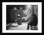 Elephant Watching Television by Corbis