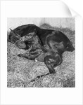 Andromeda and Foal by Corbis