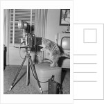Cat Playing with Camera by Corbis