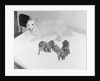 Dogs Lying on Bed by Corbis