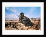 Bird on the Beach by Corbis