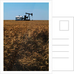 Crops Ready for Harvest by Corbis