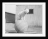 Cat Standing on Wood Ball by Corbis