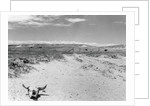 Drought Scene with Bleached Skull by Corbis
