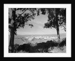 Distant View of San Francisco Through Tree Line by Corbis