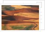 Fields in the Palouse by Corbis