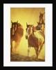 Running Horses by Corbis