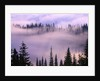 Fog Lifting over Trees by Corbis