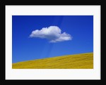 Cloud over Canola Field by Corbis