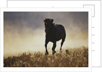 Galloping Horse and Dust Cloud by Corbis