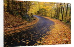 Autumn Leaves on a Curved Road by Corbis