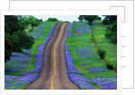 Bluebonnets Along a Highway by Corbis