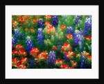 Bluebonnets and Paint Brush by Corbis