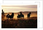 Horses on the Run by Corbis