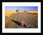Cowboy Boots on Gravel Road by Corbis