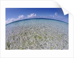 Clear Tropical Waters at Pitcairn Islands by Corbis