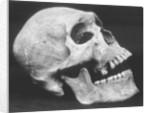 Human Skull by Brett Weston