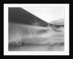 Dunes, California, 1953 by Corbis