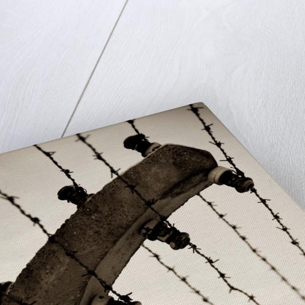 Barbed wire fence by Ricardo Demurez