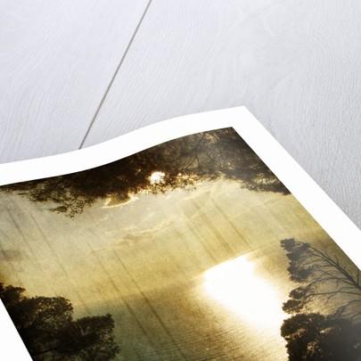Golden landscape by Ricardo Demurez