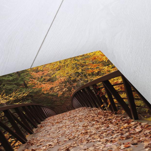 Autumn time by Alex Maxim