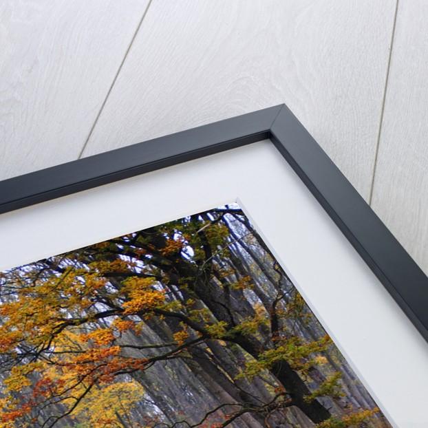 fall by Wolfgang Simlinger