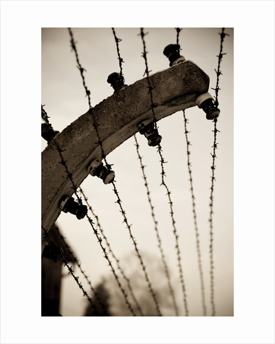 Barbed wire fence by Ricardo Demurez