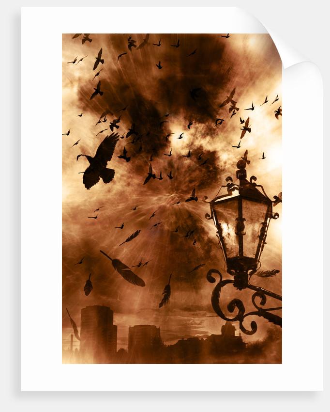 birds by Alexandra Stanek