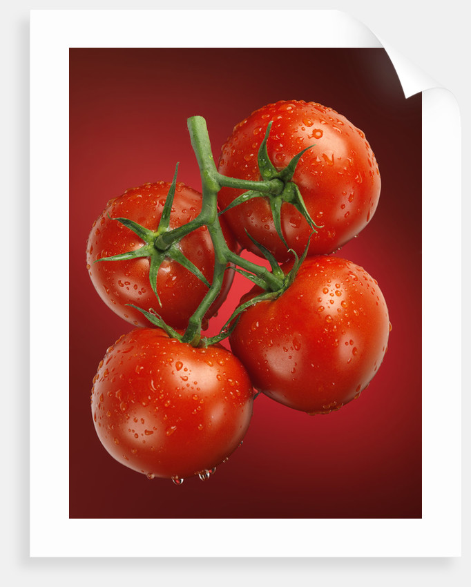 Four tomatoes no.1 by Alex Maxim