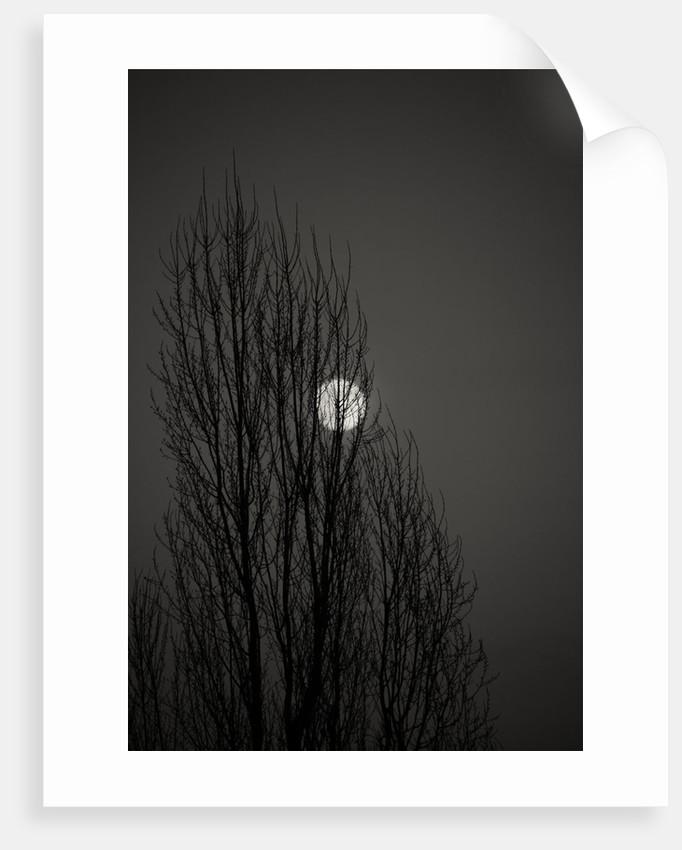 Moon by Izabela Maciusowicz