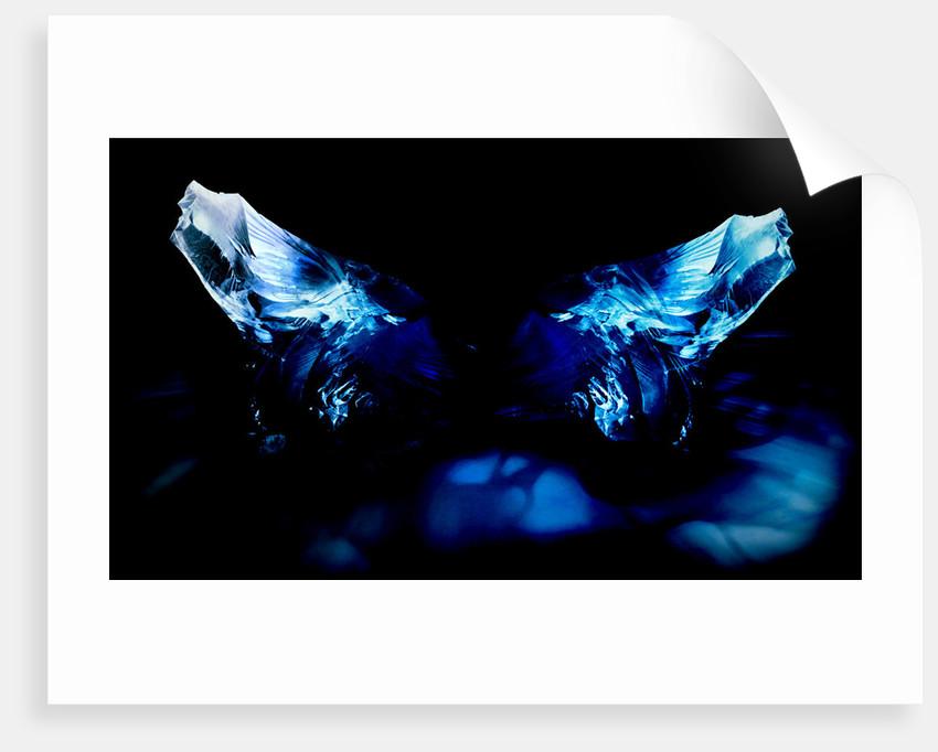 butterfly by Alexandra Stanek
