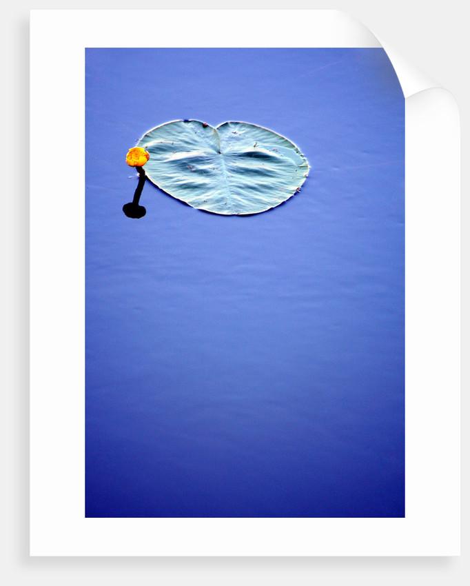 Beaute d'eau by Cathy Baillet