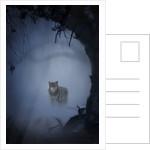 wolfnight by Alexandra Stanek