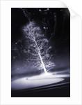 dream of snow by Alexandra Stanek