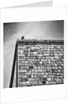 Pigeon on the roof by Eugenia Kyriakopoulou